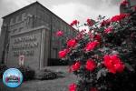 Red Roses at Church